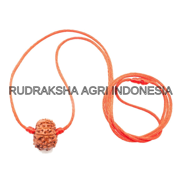 11 MUKHI RUDRAKSHA RED THREAD