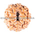 products/11MukhiRudraksha16.40mm_11-004_BWEB.jpg