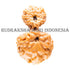 products/13_Mukhi_Garbh_Gauri_Rudraksha_17.30mm_B_WEB_887ad4f8-7e8b-41b7-bb51-6789a879321c.jpg