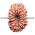 products/15Mukhi18.20mmBWEB.jpg
