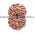 products/15MukhiRudraksha_15-008B_WEB.jpg