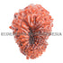 products/16Mukhi16-00217-50mmBWEB.jpg