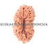 products/16MukhiRudraksha_16-009B_WEB.jpg