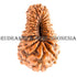 products/24MukhiRudraksha17.80mm_CL-004_BWEB.jpg
