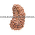 products/26MukhiRudraksha11.50mm_CL-002_BWEB.jpg