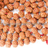 products/6_Mukhi_Mala_Rudraksha_10.00mm_B.jpg