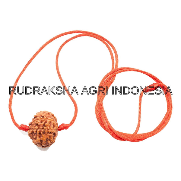 9 MUKHI RUDRAKSHA RED THREAD