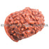 products/GN-0028Mukhi17-30mmBWEB.jpg