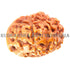 products/GN-0069Mukhi17-80mmBWEB.jpg