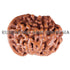 products/Ganesha_Rudraksha_17.60mm_9Mukhi_GN-007B_-WEB.jpg