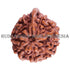 products/Ganesha_Rudraksha_17.60mm_9Mukhi_GN-007D_-WEB.jpg
