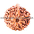 products/Ganesha_Rudraksha_17.80mm_D.jpg