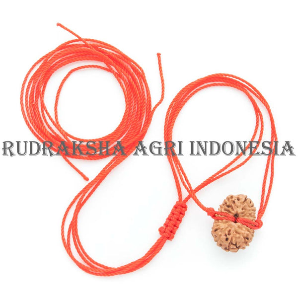 Red Thread Rudraksha