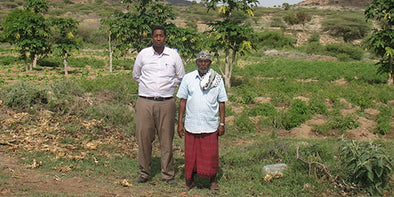 Somaliland Farm Project with Gollis University