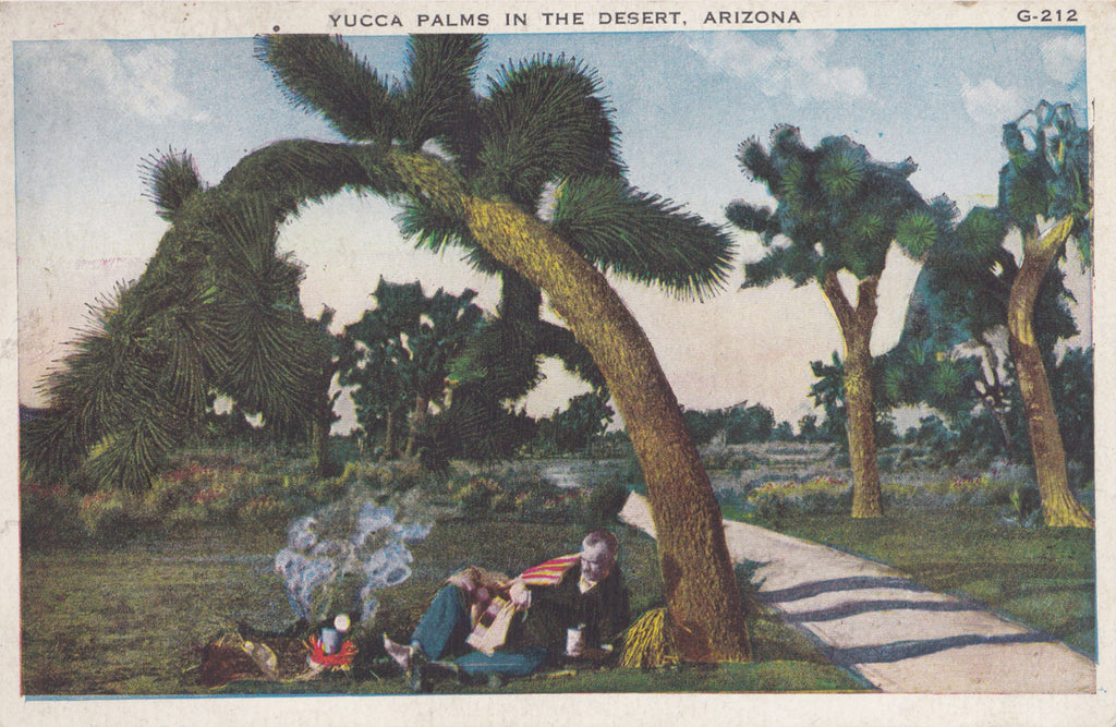 Yucca Palms in the Desert- 1920s Antique Postcard- Phoenix, Arizona- Desert Scenery- A O Boeres- Southwest Landscape
