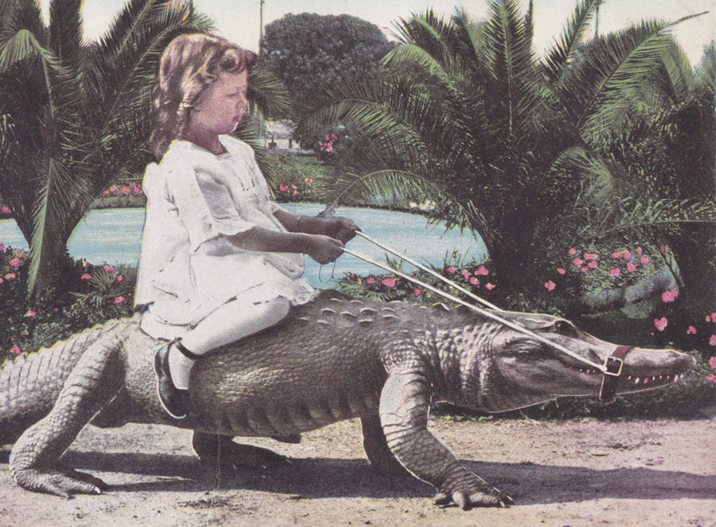 Alligator Joy Riding- Postcard, c. 1900s