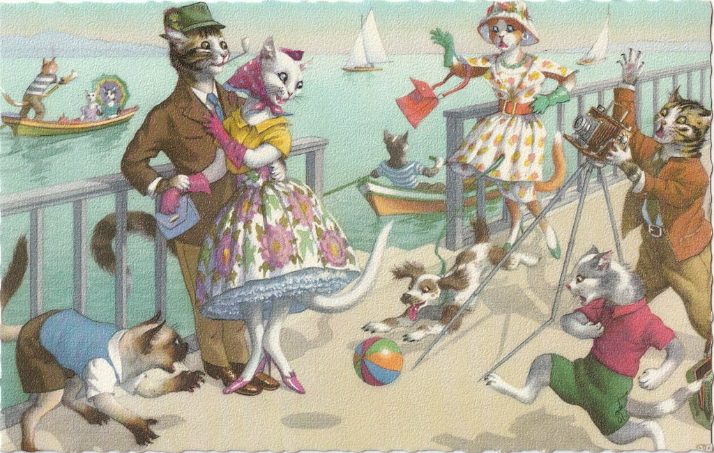 Alfred Mainzer Cats Postcard No. 4905