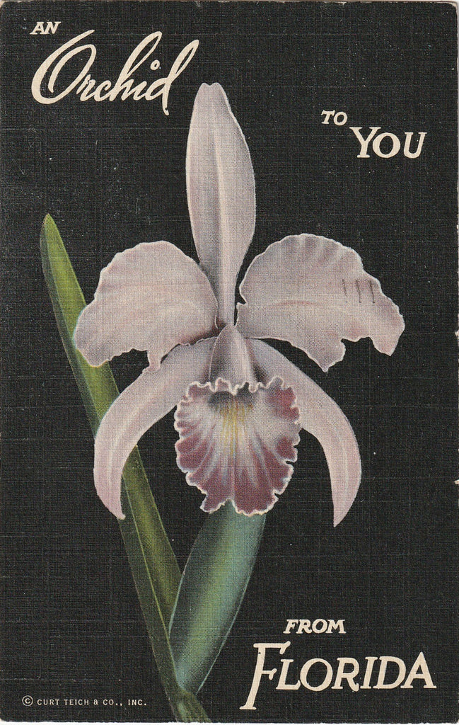 An Orchid to You From Florida Postcard