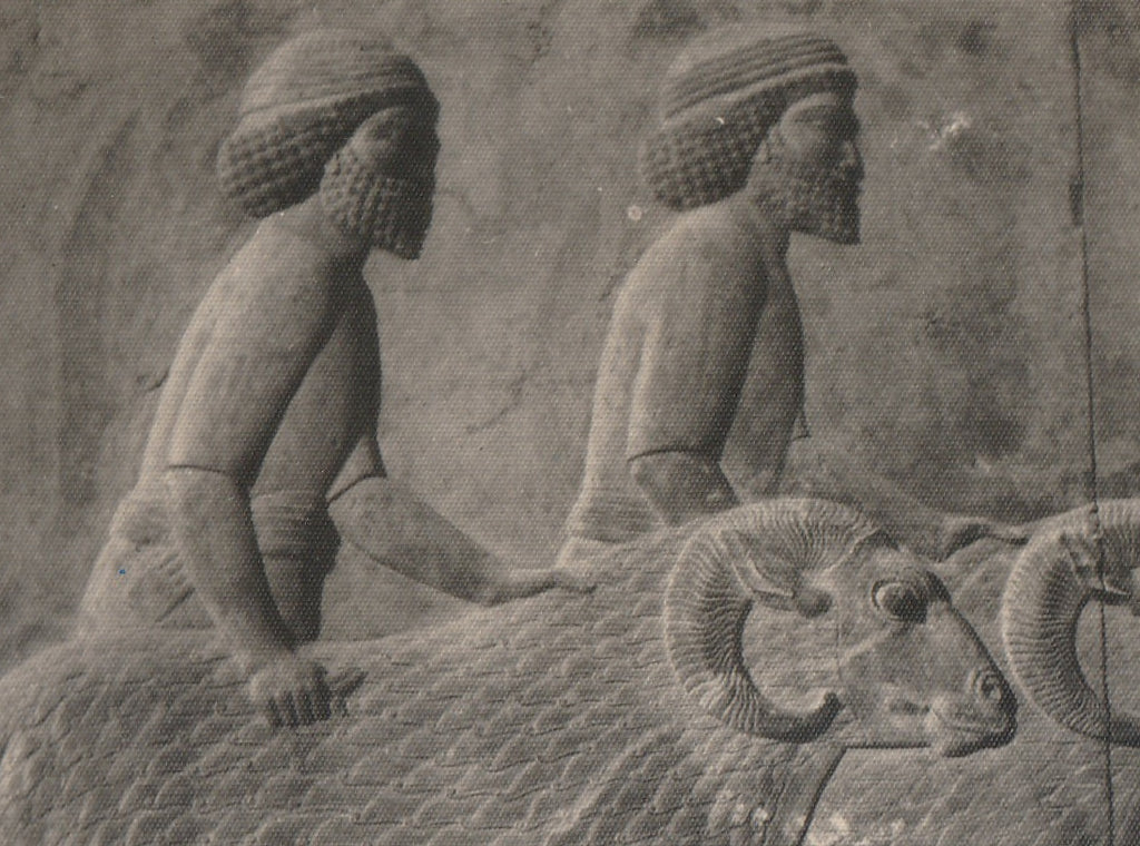 Ancient Syrians with Rams Relief- Persepolis, Apadana, East Stairs - RPPC Close Up