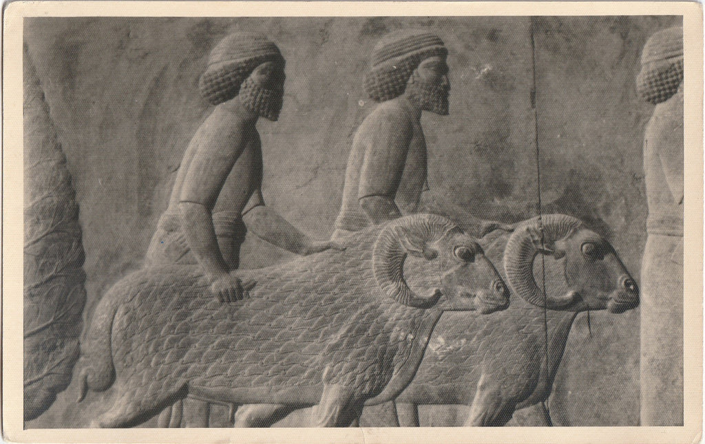 Ancient Syrians with Rams Relief- Persepolis, Apadana, East Stairs - RPPC