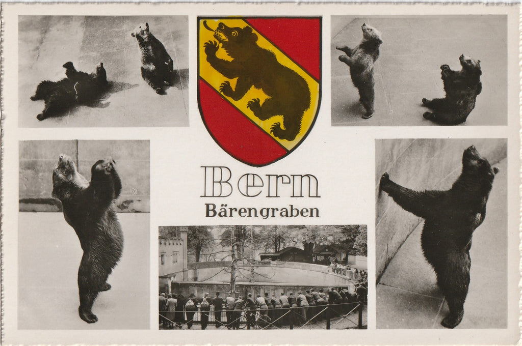 Bärengraben Bear Pit - Bern, Switzerland - RPPC, c. 1950s