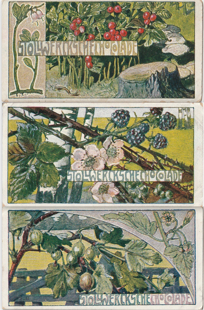 Berry Bushes Stollwerck Chocolate Trade Cards Set of 3