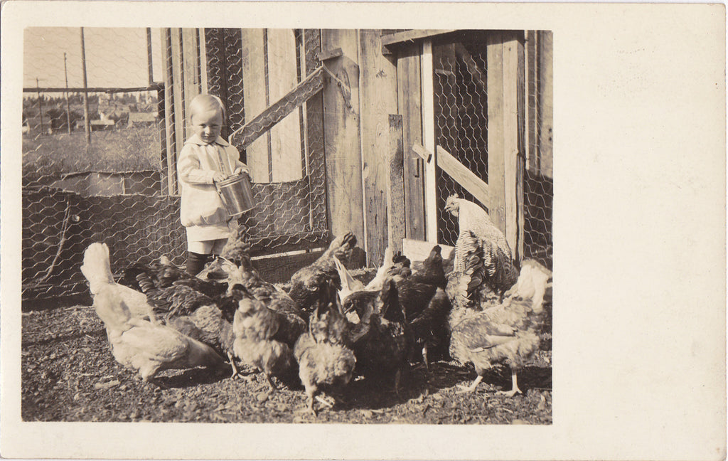Edwardian Boy Feeding Chickens RPPC