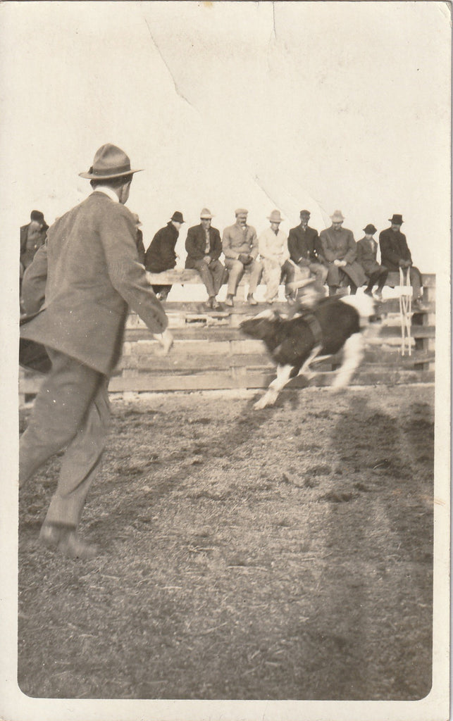 Bucking Bull Rodeo Casper Wyoming RPPC