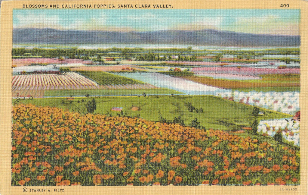 California Poppies Santa Clara Valley Vintage Postcard