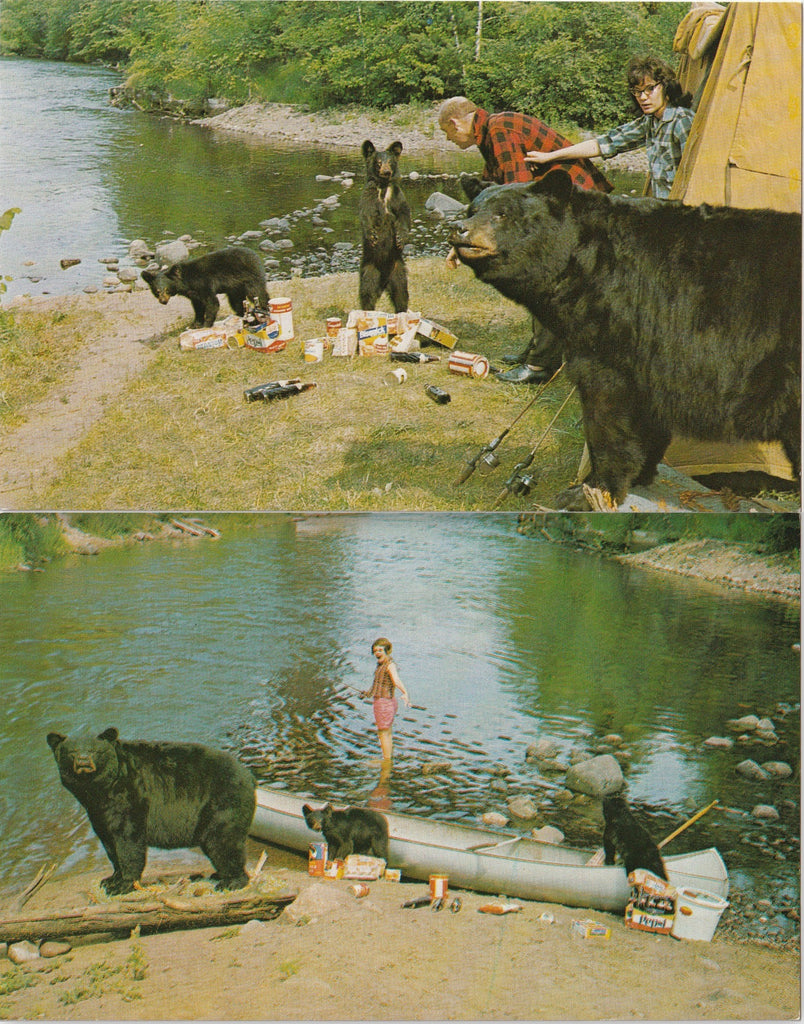 Camping with Hungry Bears Postcards SET of 2