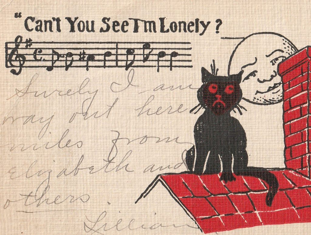 Can't You See I'm Lonely Black Cat Postcard Close Up