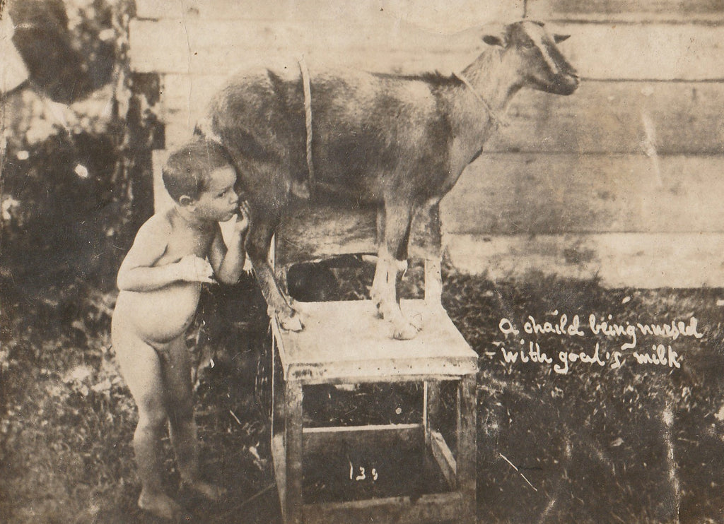 Child Being Nursed By Goat  RPPC Close Up
