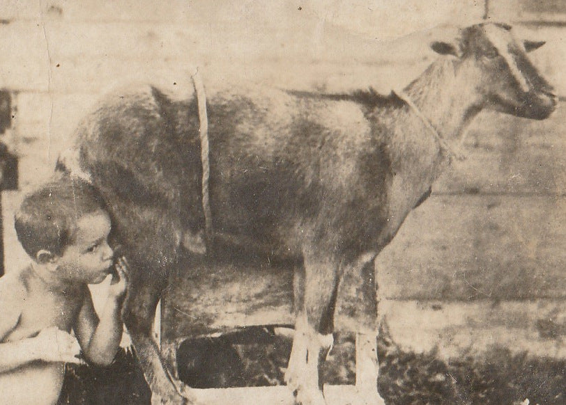 Child Being Nursed By Goat  RPPC Close Up 2