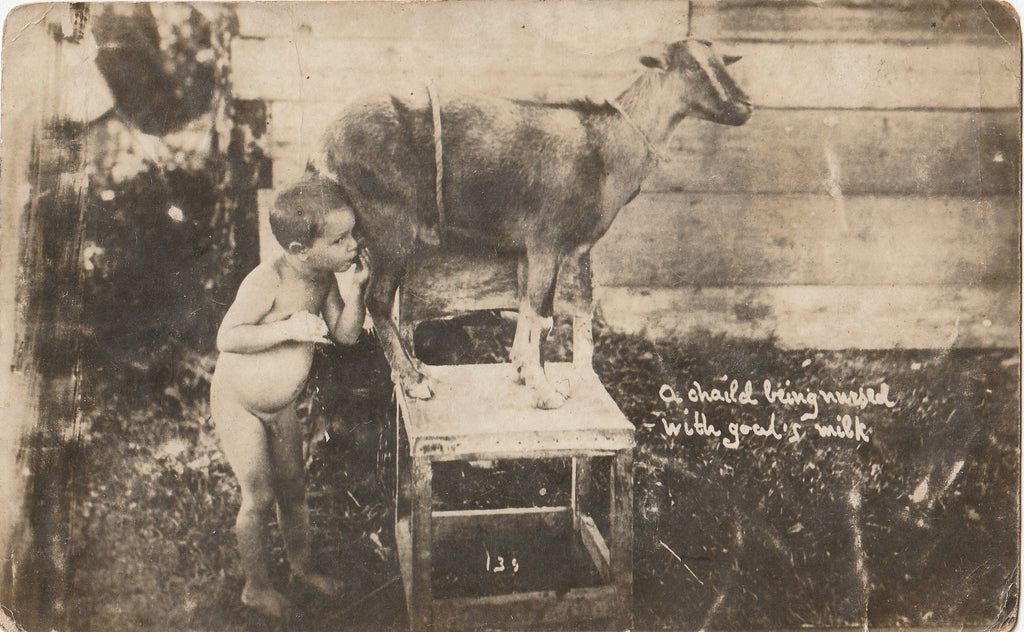 Child Being Nursed By Goat  RPPC