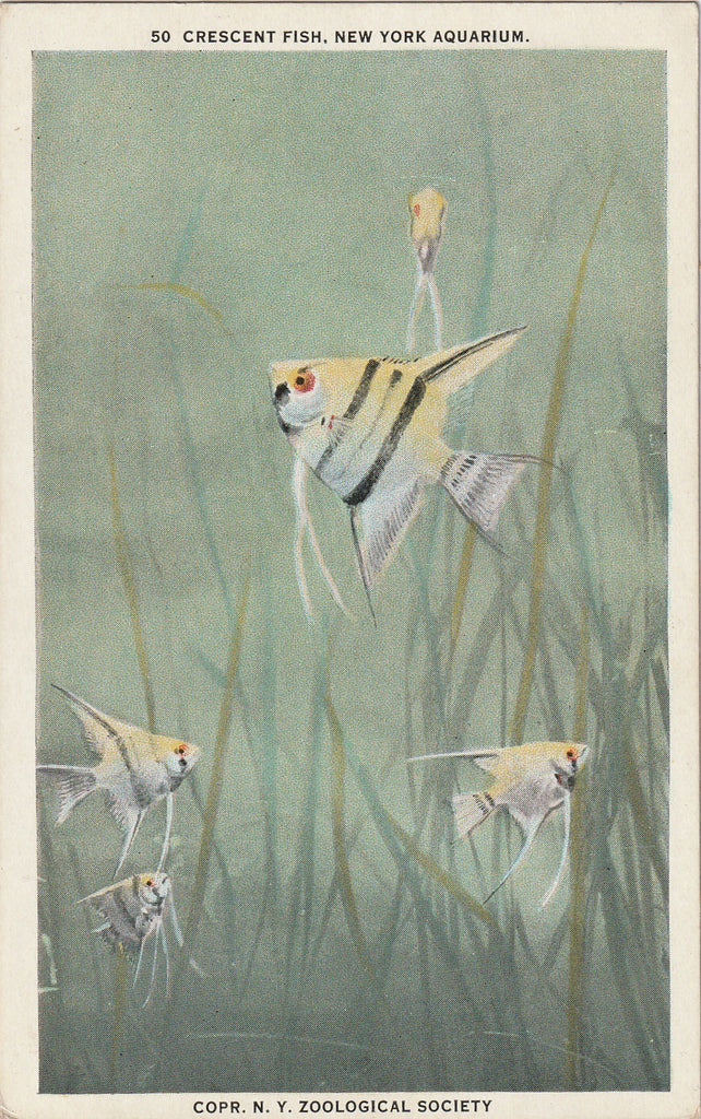 Crescent Fish New York Aquarium Antique Postcard