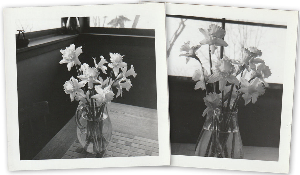 Daffodils in Vase - SET of 2- Snapshots, c. 1960s