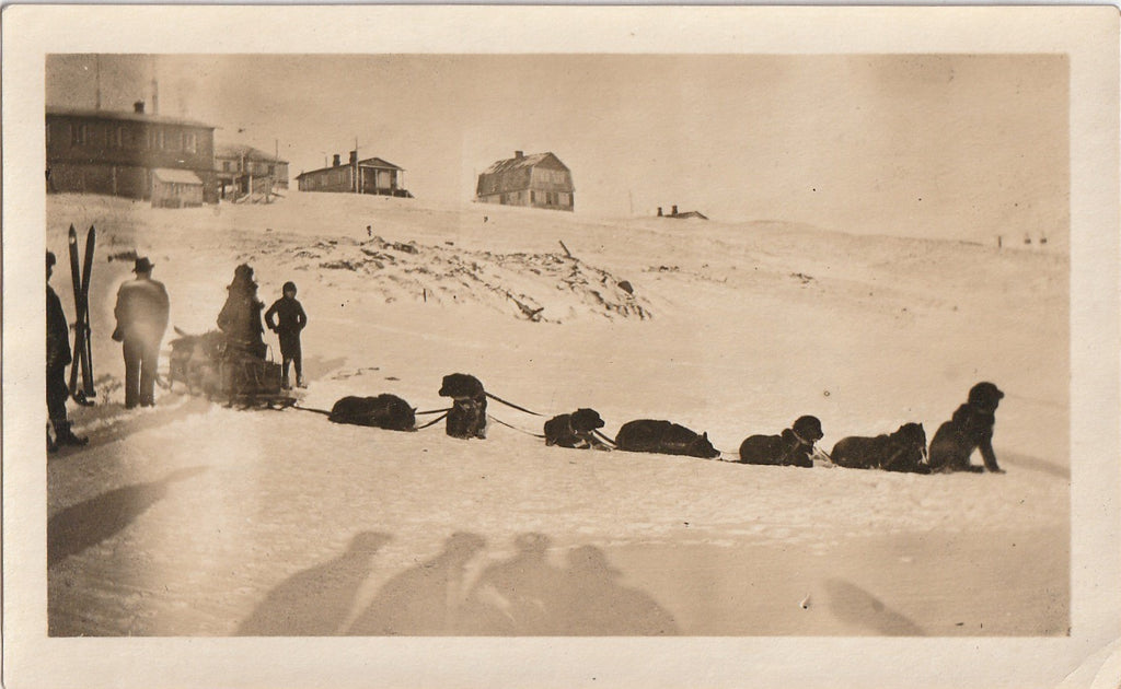 Dog Sled Racing 1920s Snapshot