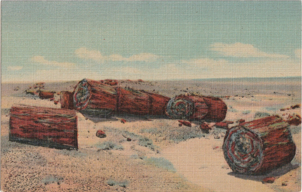 Driftwood Petrified Forest Arizona Vintage Postcard