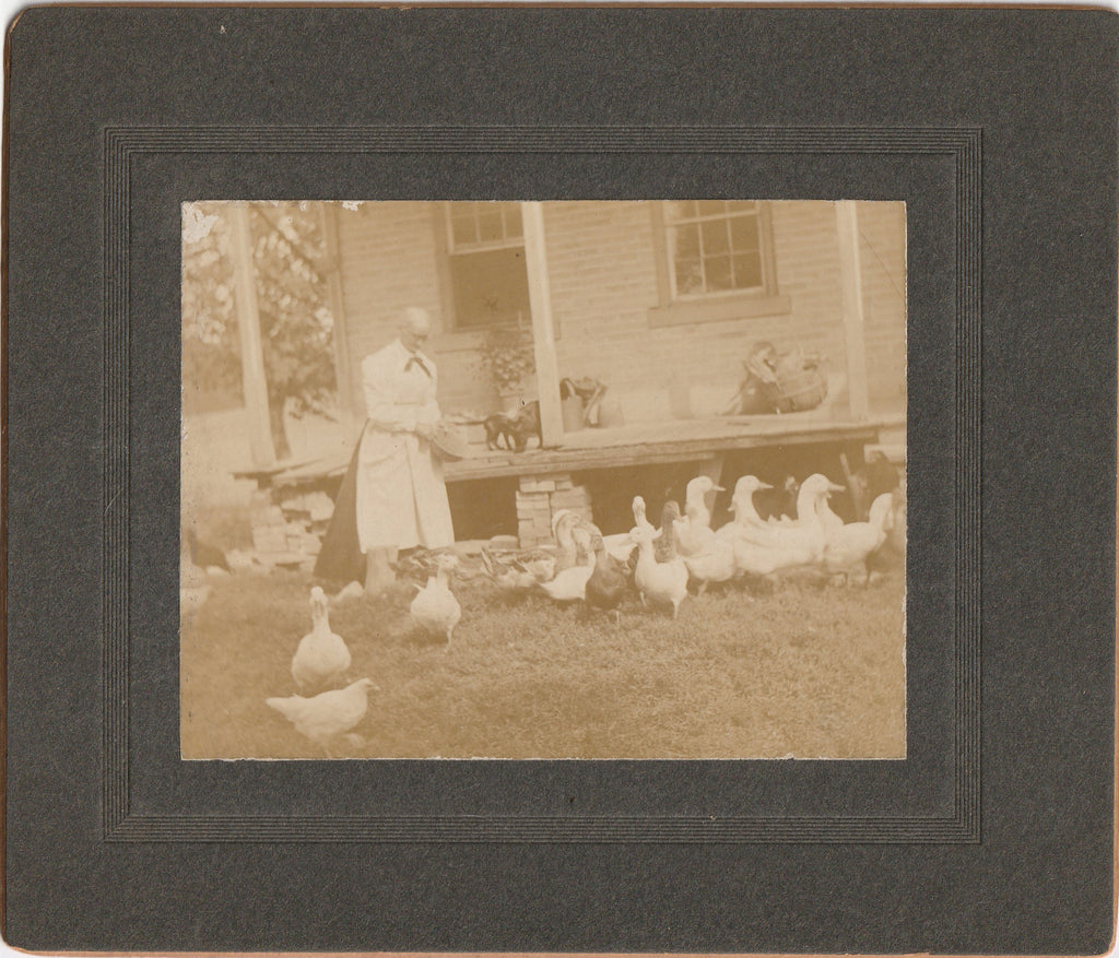 Ducks, Chickens and Cats - Cabinet Photo, c. 1900s