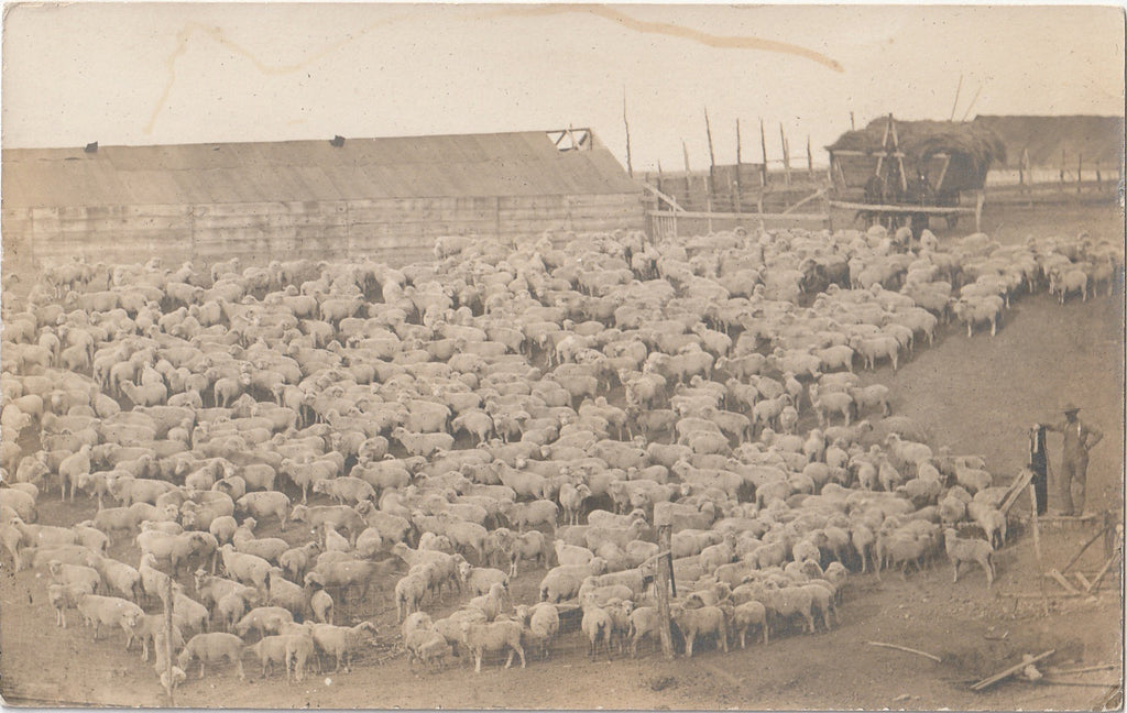 E L Hill Sheep Farmer RPPC Photo