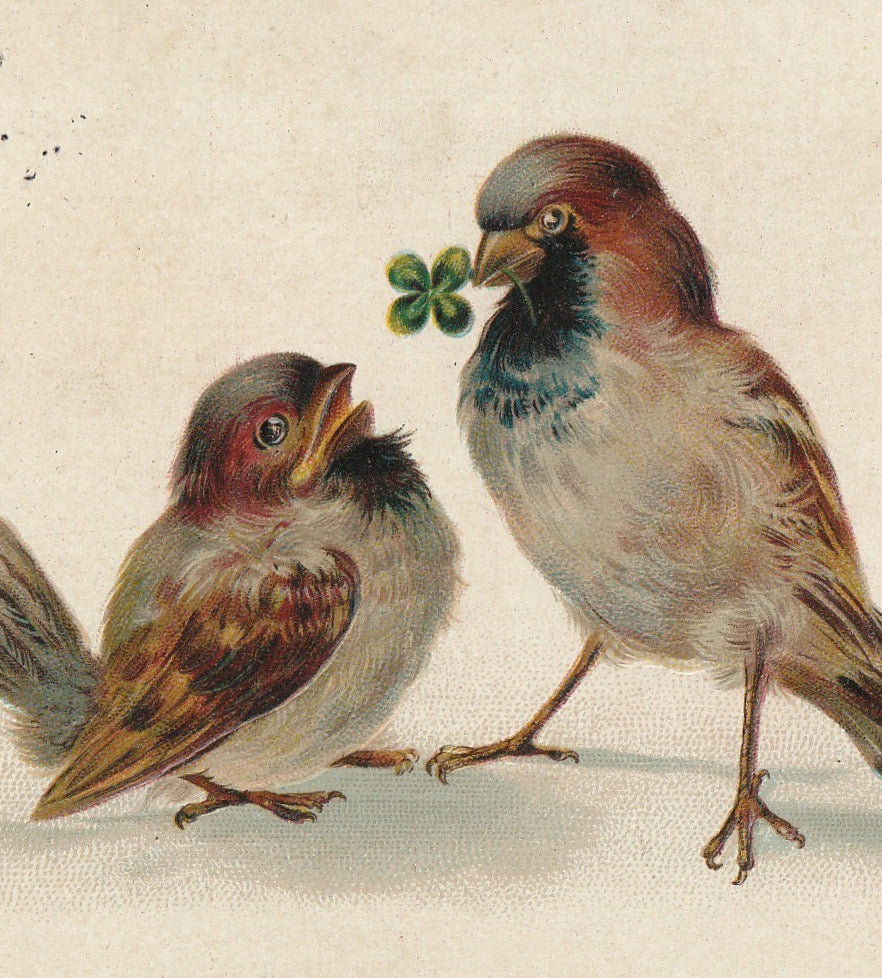 Four Leaf Clover Birds Postcard Close Up 2