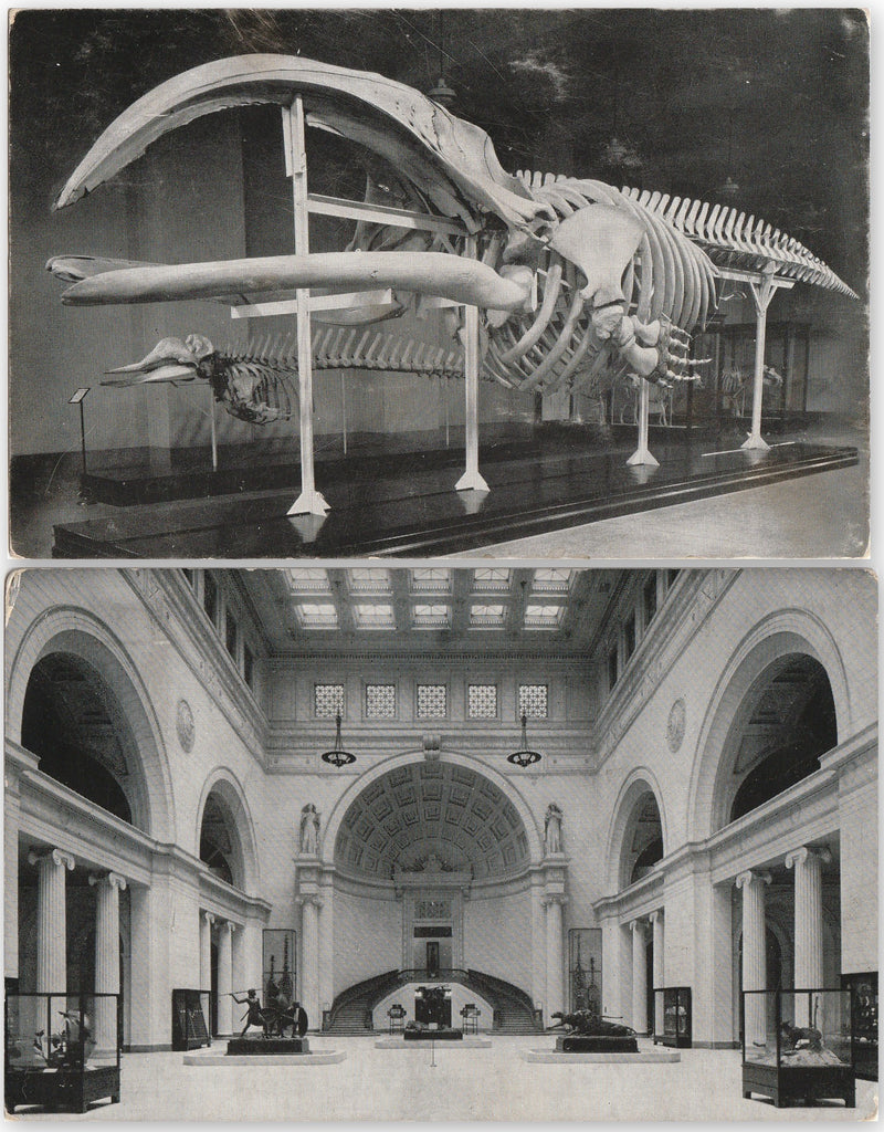 Field Museum of Natural History Chicago Vintage Postcards