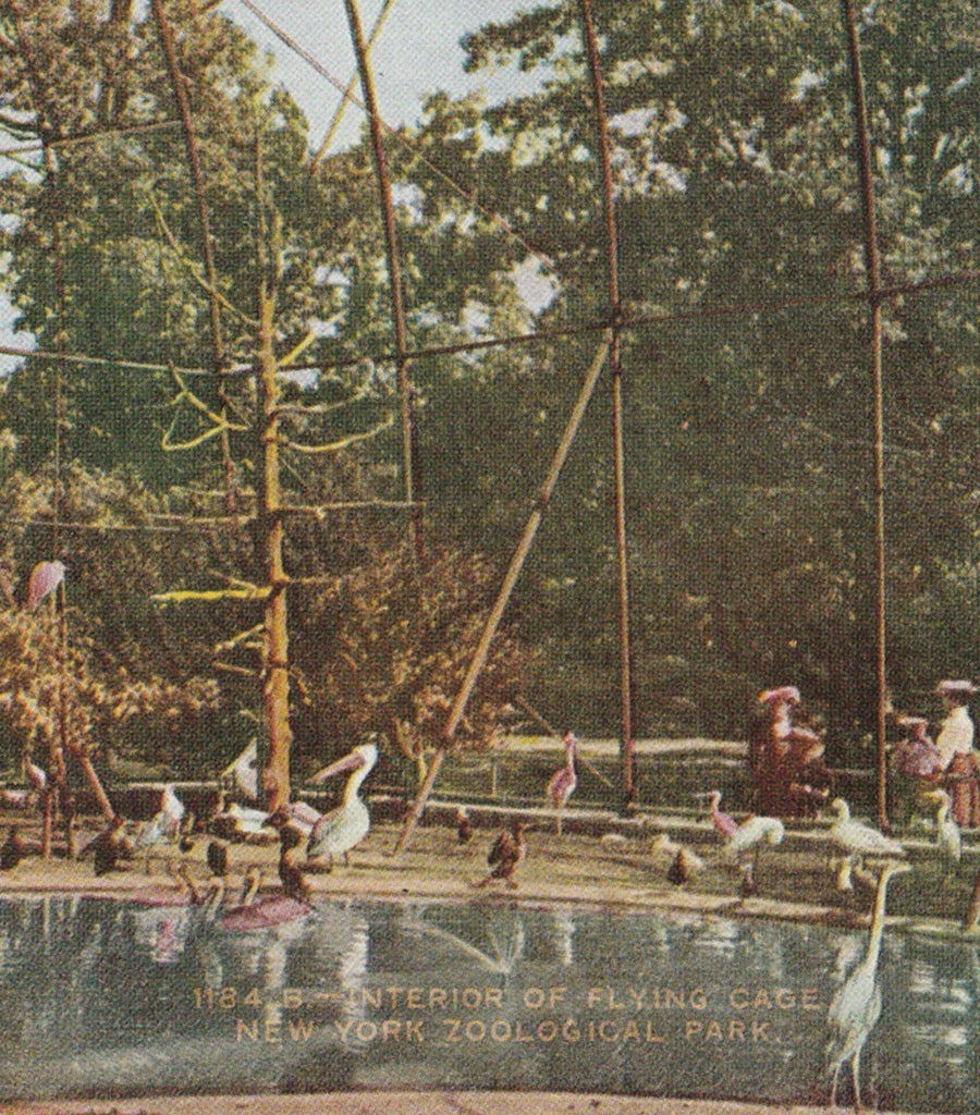 Pelican Flying Cage New York Zoological Park Postcard Close Up