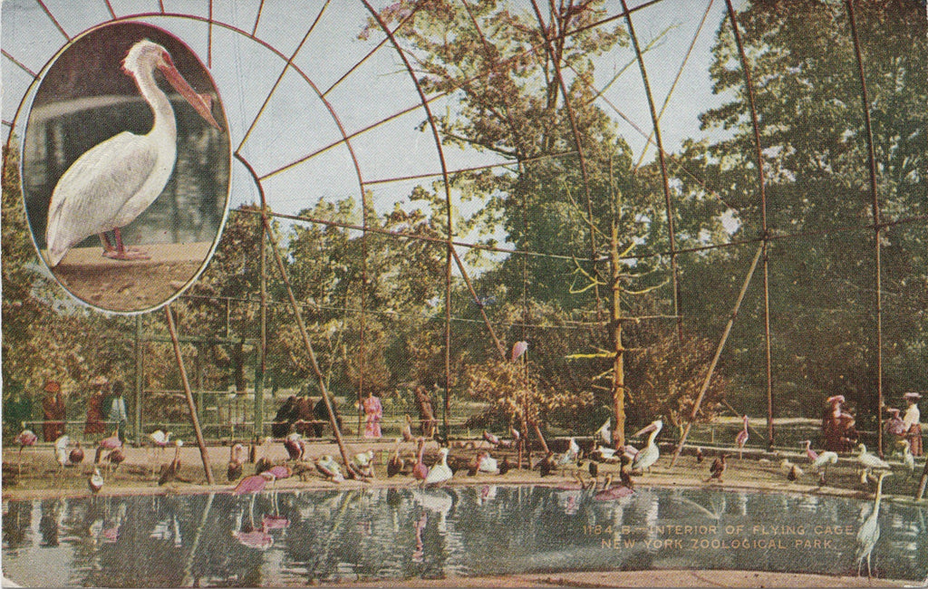 Pelican Flying Cage New York Zoological Park Postcard