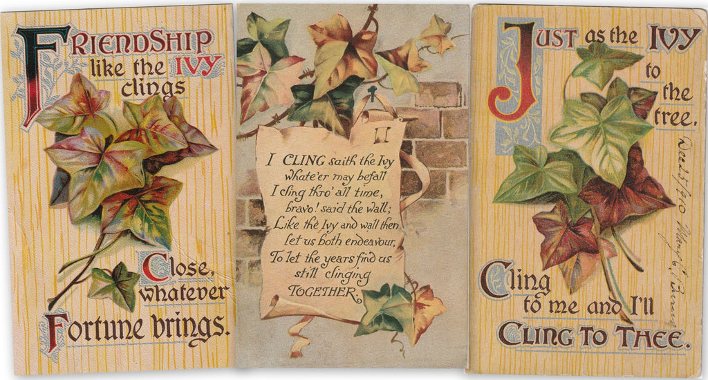Friendship Ivy Antique Postcards