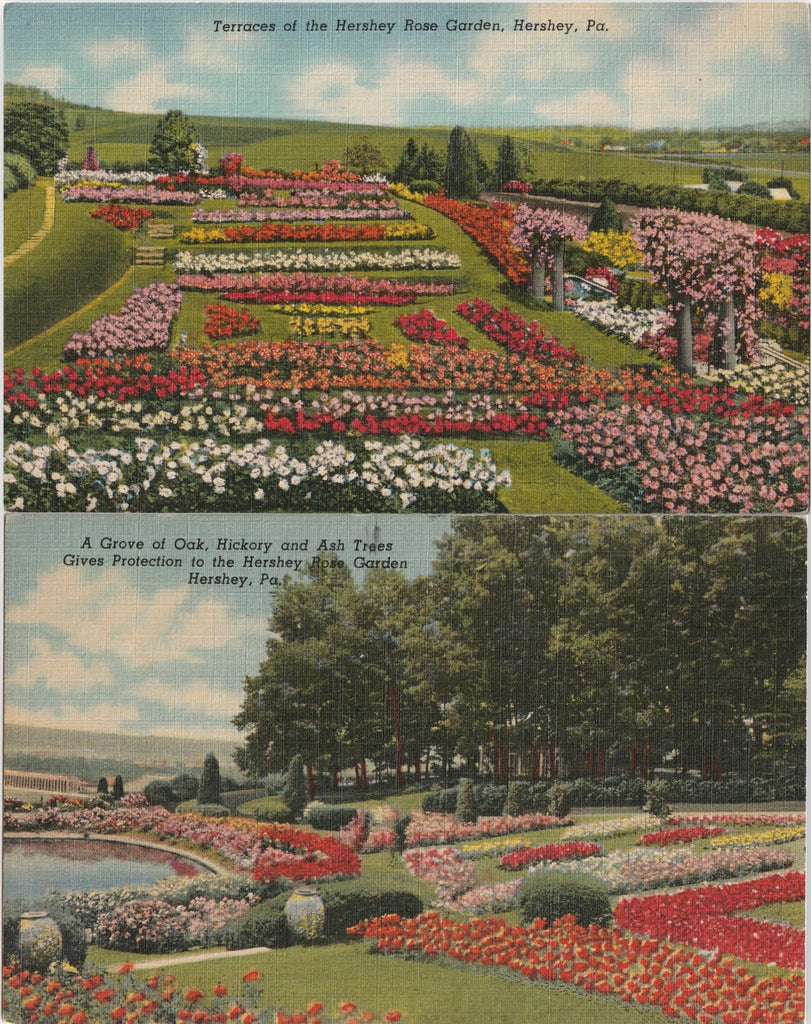 Grove at Hershey Rose Garden Pennsylvania Vintage Postcard SET