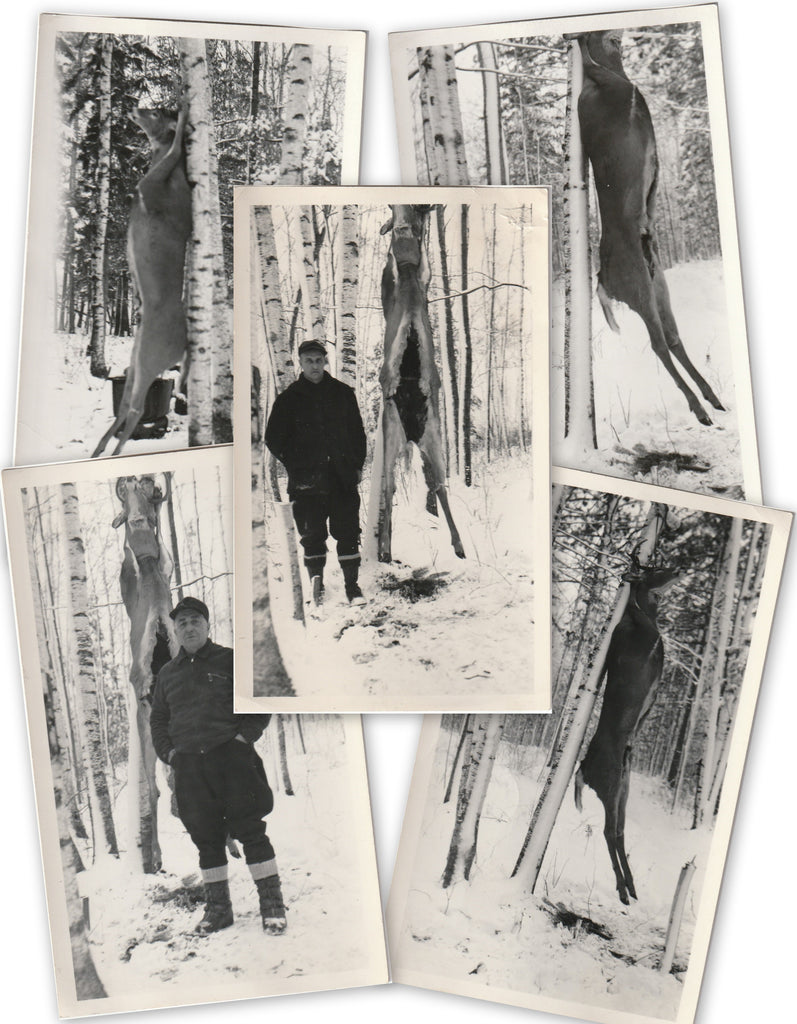 Hanging Venison - Deer Hunters - SET of 5 - Photos, c. 1940s