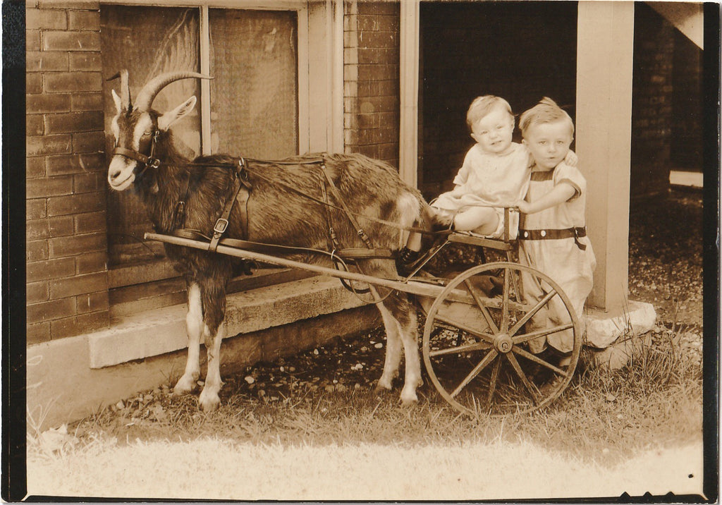 Horned Goat Cart Vintage Photo