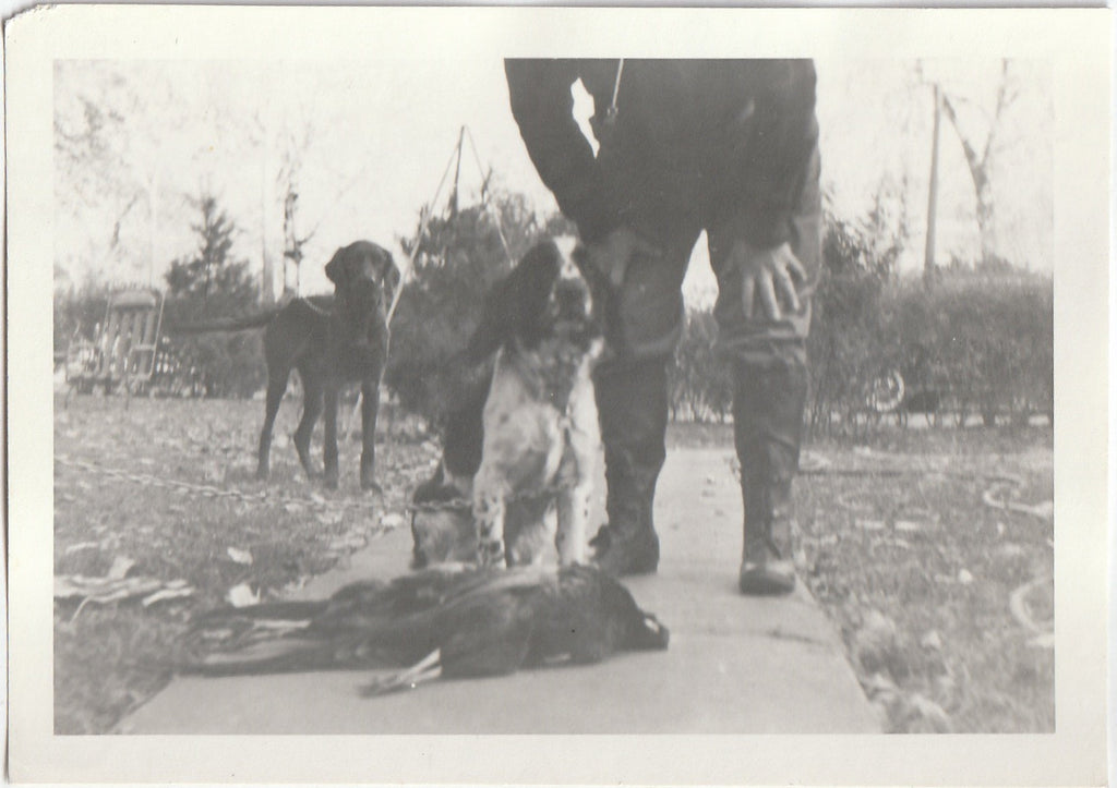 Hunting Dogs - Pheasant Hunter - 3 of 4 - Photo, c. 1950s