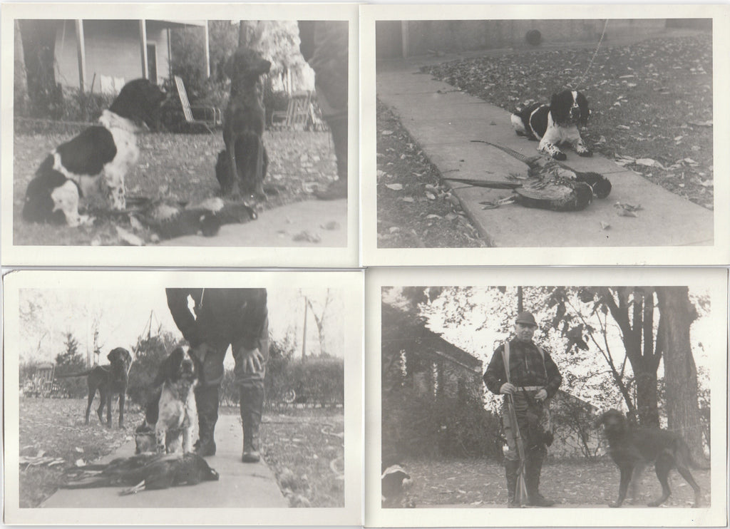 Hunting Dogs - Pheasant Hunter - SET of 4 - Photos, c. 1950s